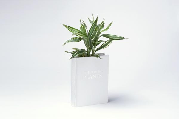 blumen vase design ideen originell innovativ pflanzen