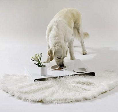 Designer Möbel und Accessoires für Haustiere angebracht