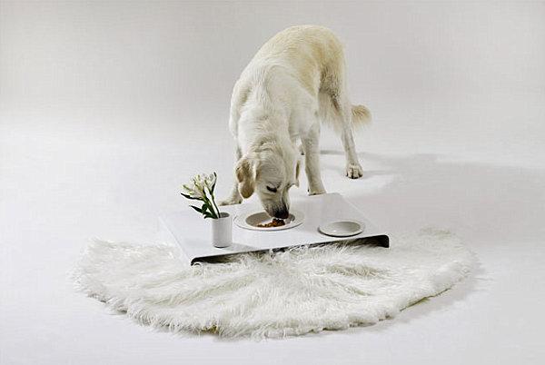 Designer Möbel und Accessoires für Haustiere bedienung futter hund