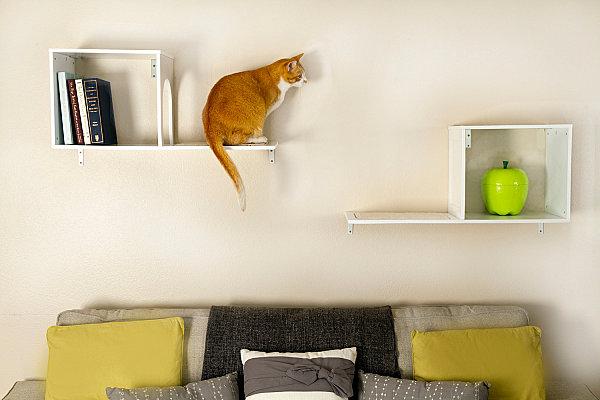 Designer Möbel Und Accessoires Für Haustiere Regale Katze. In Einem Album  Speichern