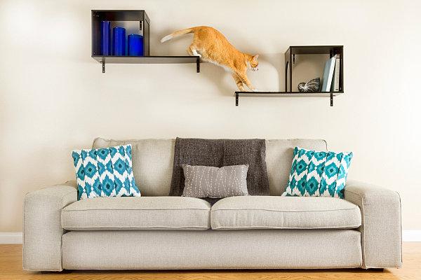 designer m bel und accessoires f r haustiere angebracht. Black Bedroom Furniture Sets. Home Design Ideas
