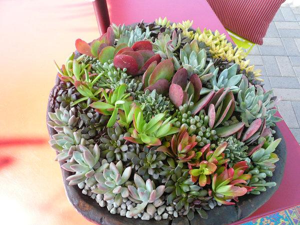 Tipps zu Sukkulenten Arrangements pflanzen