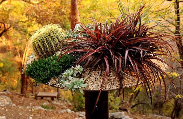Tipps zu Sukkulenten Arrangements pflanzentopf