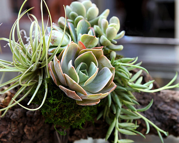 Tipps zu Sukkulenten Arrangements schönheit