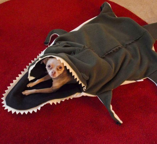 möbel für haustiere bett haifisch