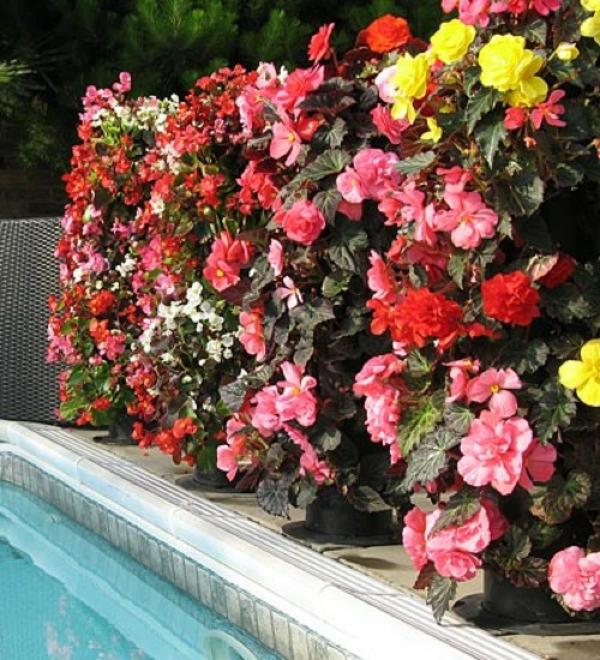 absolut blumige Gartengestaltung für jeden geschmack direkt am pool