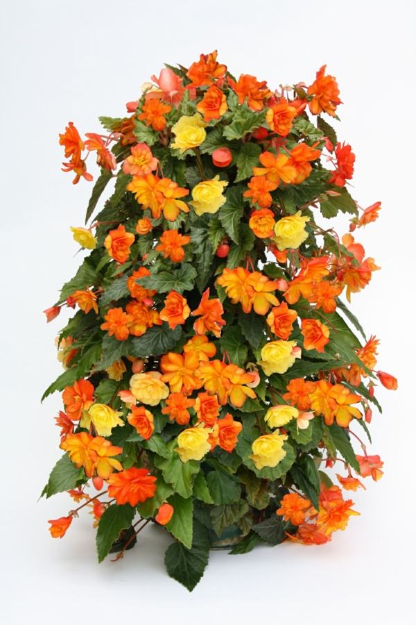coole blumentürme gelb und orange für helle stimmung