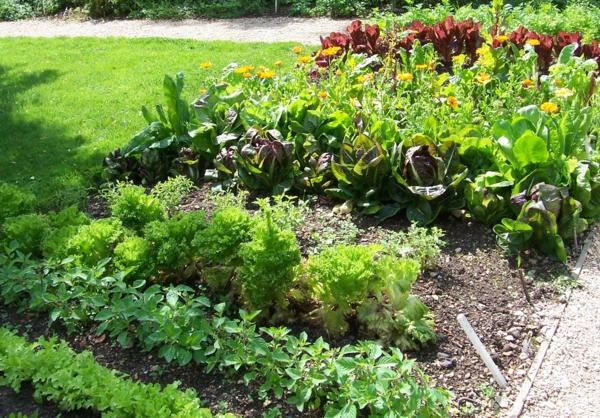 der slow gardening trend blattgemüse und ringelblumen