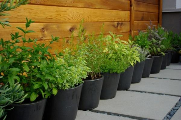 der slow gardening trend ganz viele küchenkräuter