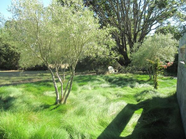 der slow gardening trend wilde wiese üppiges gras