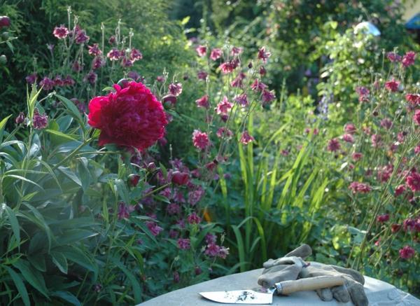 der slow gardening trend wunderschöne pfingstrosen