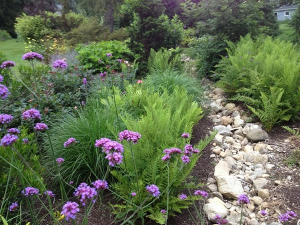 der slow gardening trend zarte lila blümchen und farn