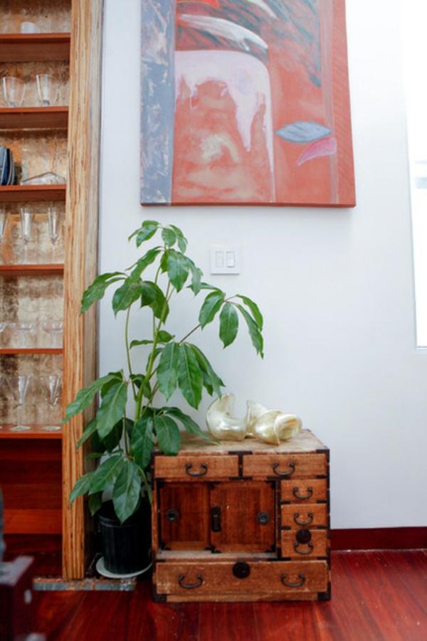 eine robuste zimmerpflanze hölzerner antik schrank