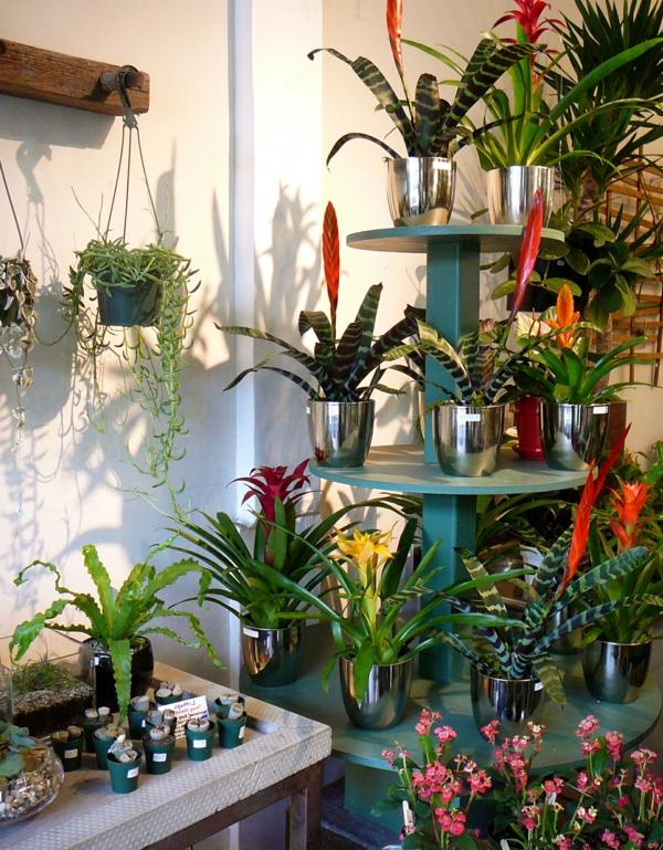 exotische dekoration mit tropischen pflanzen eine tolle bunte sammlung