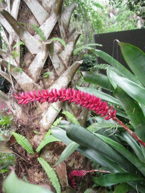 exotische dekoration mit tropischen pflanzen neben palme