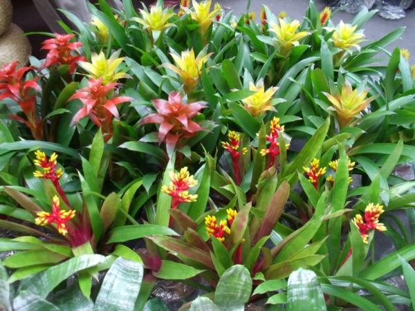 exotische dekoration mit tropischen pflanzen wunderschöne farbpalette