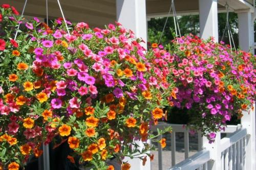Kleinen Balkon Pflanzen Pflanzen Für Balkon Pictures to pin on
