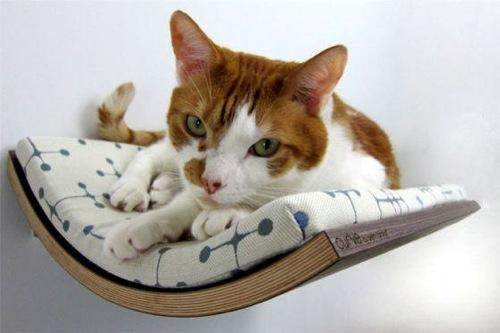 katzen liege idee design möbel für haustiere