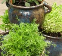 Kräuter und Gewürze selber anbauen: Kultivieren Sie Ihre eigenen kulinarischen Zusätze!