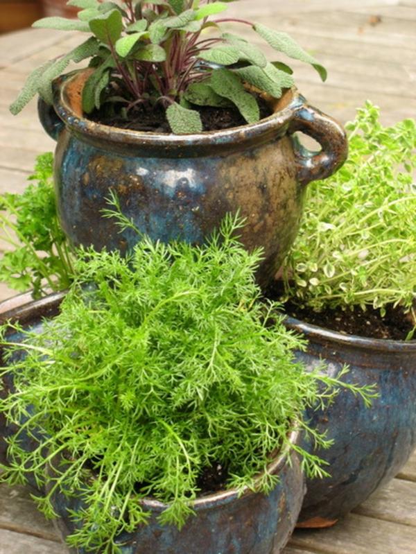 kräuter und gewürze als kübelpflanzen saftig grün