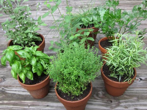 kräuter und gewürze eine grüne vielfalt
