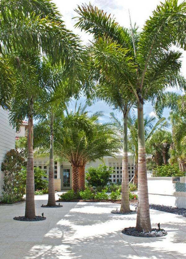 mit der richtigen palme im garten tropische stimmung schaffen. Black Bedroom Furniture Sets. Home Design Ideas