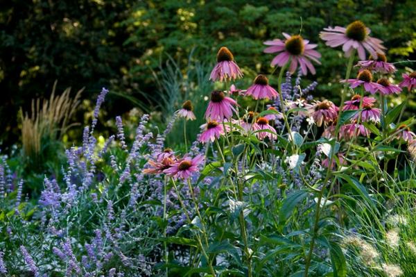 sommer im garten malerisch lila und violett