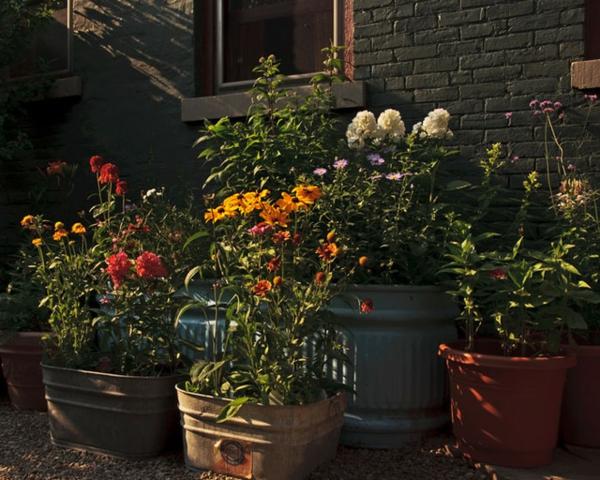 sommer im garten mit vielen töpfen und pflanzen vielfalt