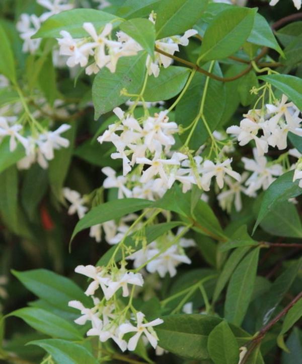 sommer im garten mit zarten weißen blüten