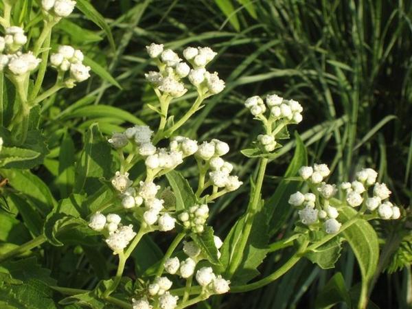 sommer im garten viele tolle pflanzen in weiß