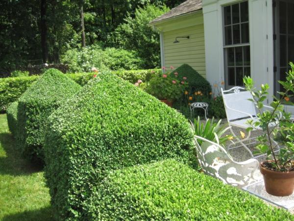Struktur im garten 5 wundersch ne pflanzenarten for Buchsbaum garten gestalten