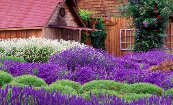 Struktur im garten 5 wundersch ne pflanzenarten for Gartengestaltung lavendel