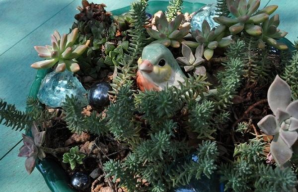 sukkulenten anordnung pflanzen dekoration keramisch vogel
