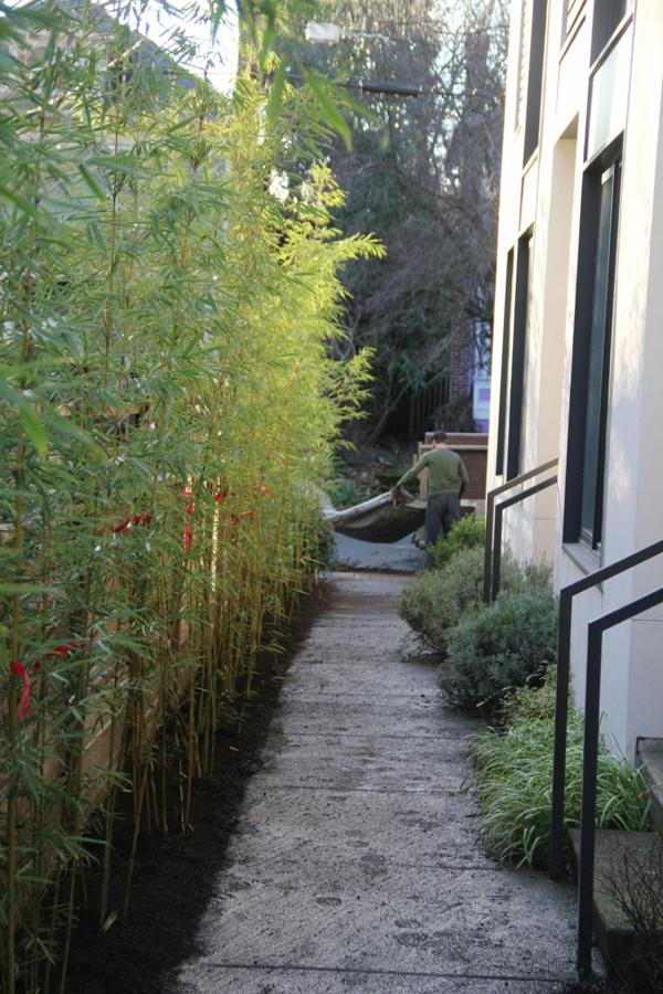 Tolle Bambus Tipps für Ihren Garten - auch für kleinere