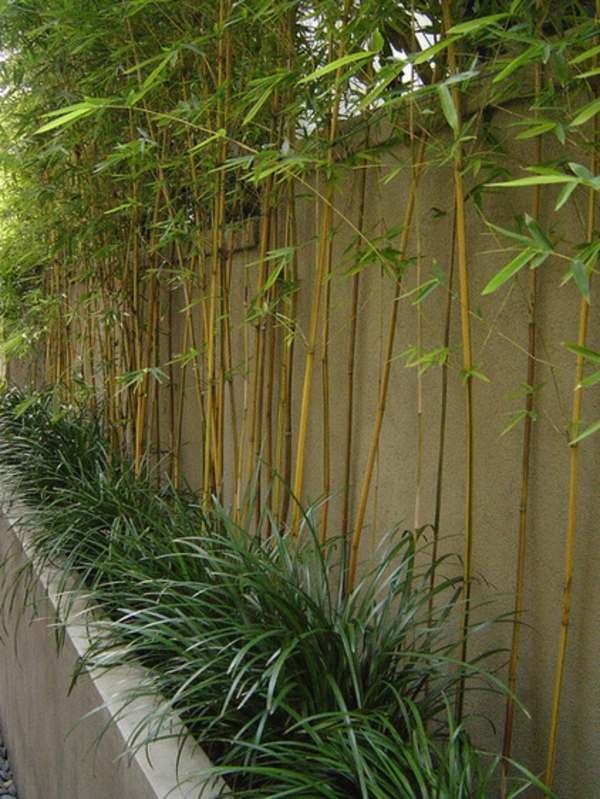 Tolle Bambus Tipps Für Ihren Garten - Auch Für Kleinere Flächen Bambus Im Garten Tipps