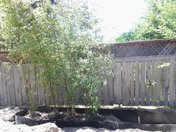 tolle bambus tipps f r ihren garten auch f r kleinere. Black Bedroom Furniture Sets. Home Design Ideas