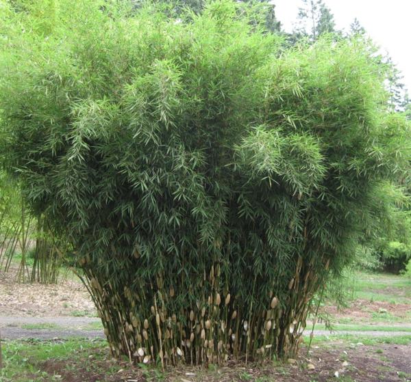 tolle bambus tipps für ihren garten - auch für kleinere flächen, Garten und bauen