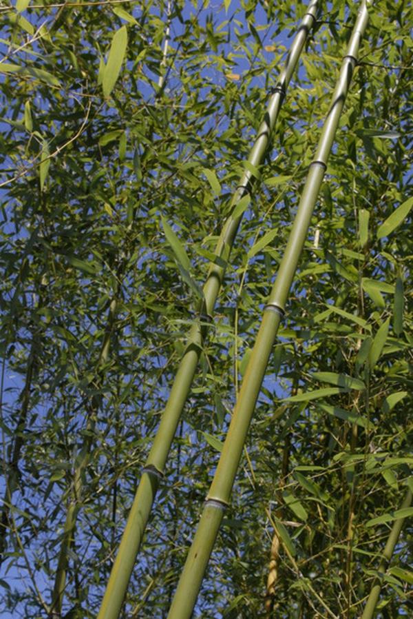 tolle bambus tipps für ihren garten - auch für kleinere flächen, Garten und erstellen