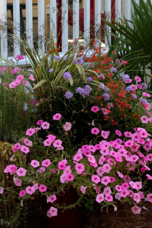 tropische pflanzen üppige blüten rosa