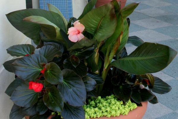 tropische pflanzen am eingang in keramik blumentopf