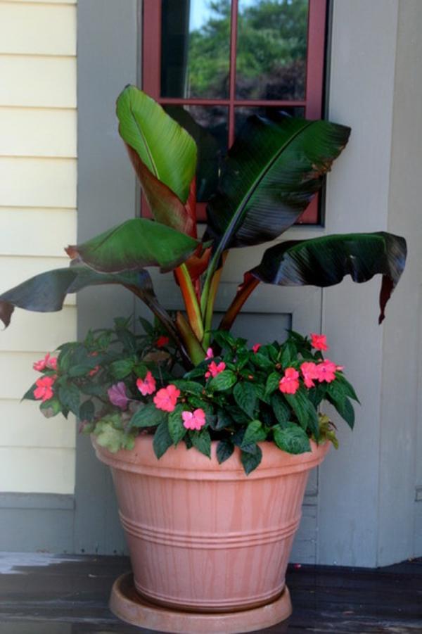 tropische pflanzen zweistufig rosa und grün