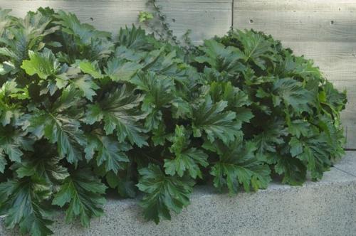 ppige pflanzen im gut gepflegten garten f r eine pr chtige landschaft. Black Bedroom Furniture Sets. Home Design Ideas