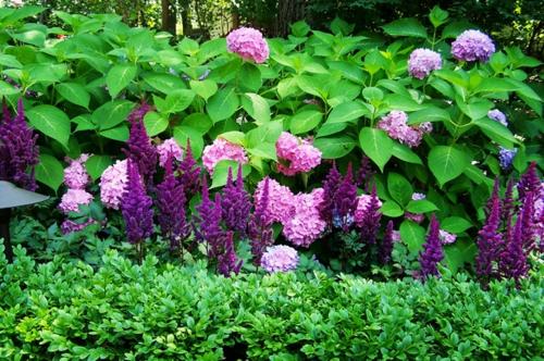 Üppige Pflanzen im gut gepflegten Garten für eine