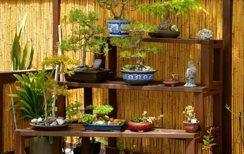 Der Bonsai Baum im Interior Design sichtschutz garten regale blumentöpfe