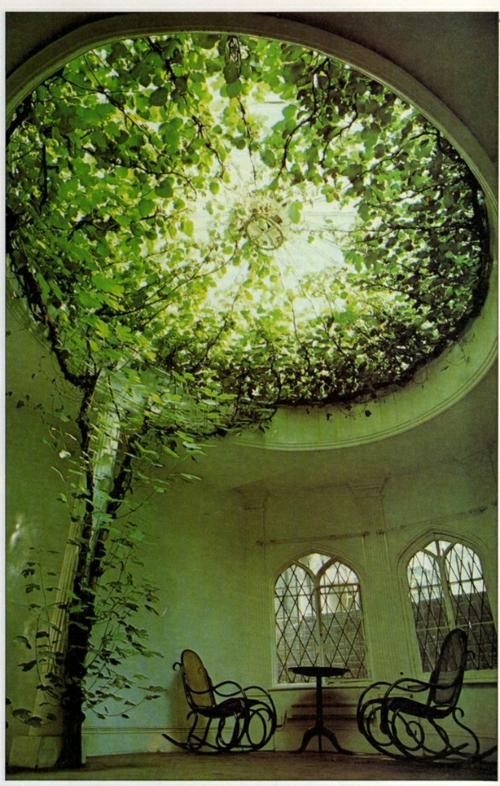 Häuser mit erstaunlichen Zimmerdecke Designs  pflanze baum abgerundet