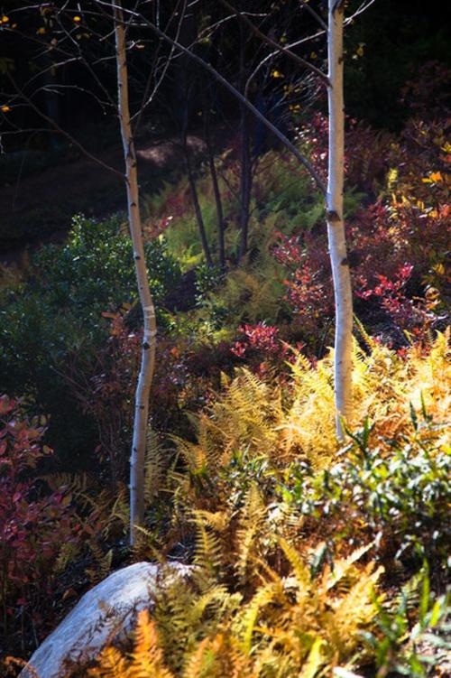 Landschaftsarchitektur und Design mit nachhaltig gewonnenem Holz vielfalt natur