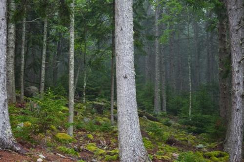 Landschaftsarchitektur mit nachhaltig gewonnenem Holz wald