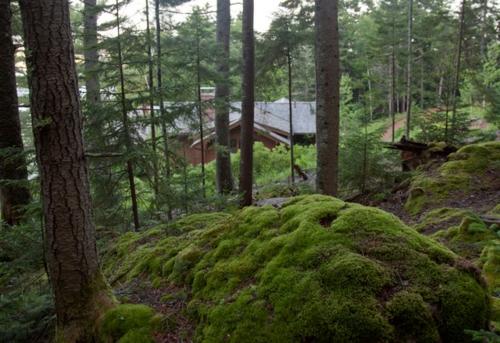 Landschaftsarchitektur und Design mit nachhaltig gewonnenem Holz bäume