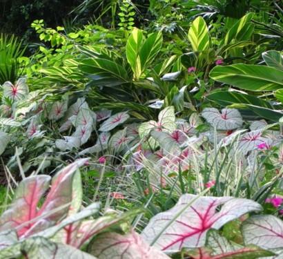 schattengarten mit tropischen pflanzen gestalten. Black Bedroom Furniture Sets. Home Design Ideas