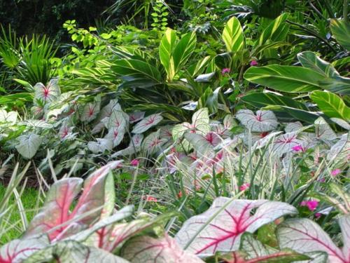Schattengarten mit tropischen Pflanzen gestalten blüten originell